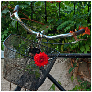bicycle basket with red rose