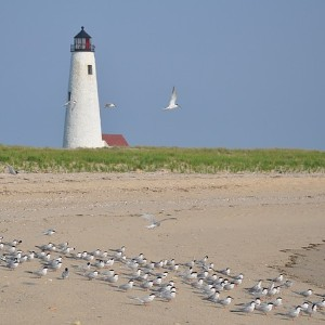 Spacious white sand beach in front of a tall white lighthouse with seagulls all over