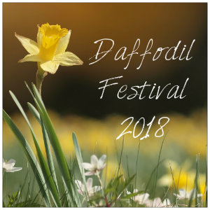 One yellow daffodil in a spring field with text Daffodil Festival 2018