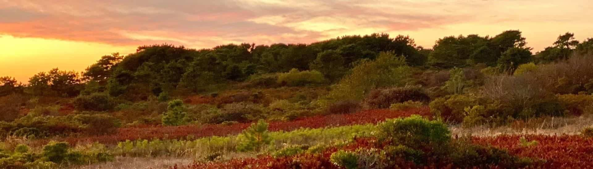 Small hill covered with red, brown, and green plants, shrubs, bushes and trees at dusk