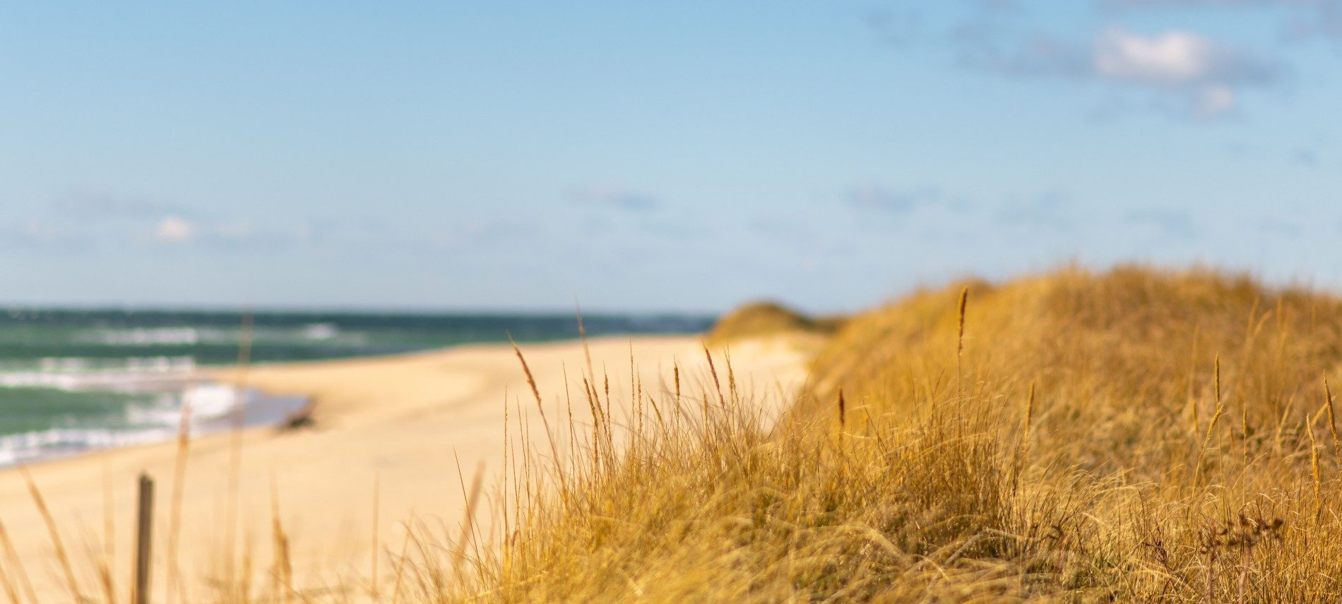 Dune with brown dune grass by expansive beach next to dark blue ocean