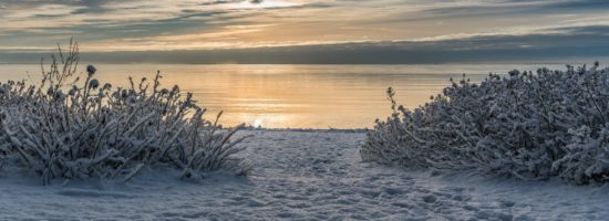 Beach of an ocean during winter with two small bushes covered in snow